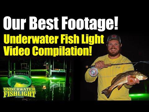 Fishing light highlight video the best of for Best underwater fishing lights