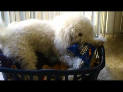 DORITOS THIEF!!!