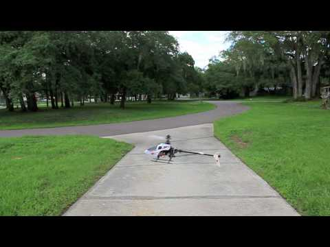 Belt CP R/C helicopter over the  green grass