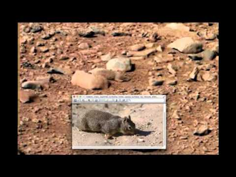 Actual Pictures of Mars Rat on Mars Actual Nasa