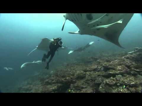 Ocean Odyssey 2010