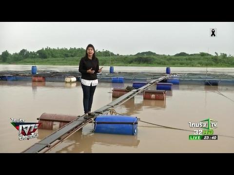 เร่งขายปลาในกระชังก่อนน้ำเหนือมา    26-05-60   ไทยรัฐเจาะประเด็น