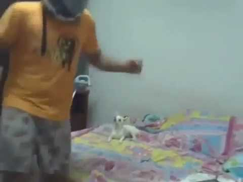 Harlem Shake do Cachorro TARADO!