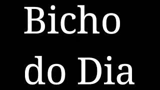 Palpite Jogo do Bicho 18-12-2018