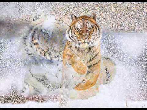 Боярский Михаил - ААПП !!! и тигры у ног моих сели
