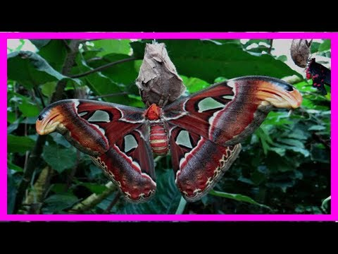 Most beautiful moths in the world