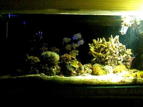 Кусочек рифа в квартире