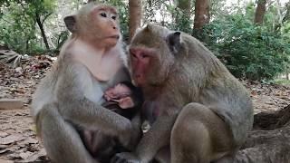 OMG    It breaks heart newborn monkey, Newborn monkey, It is pity for newborn monkey