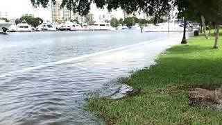 Hurricane Michael flooding at Sarasota waterfront parks