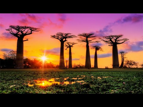 13 HOURS Morning Relaxing Music, Dissolve Negative Thoughts & Emotions, Sleep Music