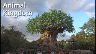 Tour of Animal Kingdom | Walt Disney World