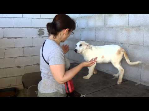 Animalinneed: Video of Dantes