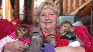 The Monkey Mum