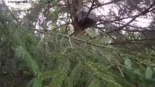 пчелы ловля роев в лесу