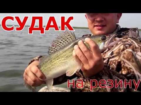 как ловить судака летом на водохранилище