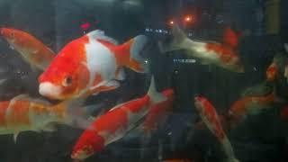 দেখুন বিদেশি মাছ
