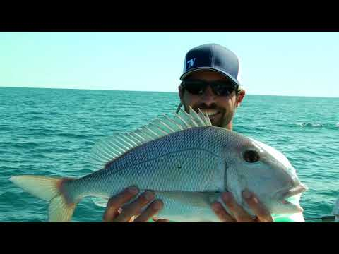 Plentiful Porgies and Hogfish Heaven Deep Sea Fishing