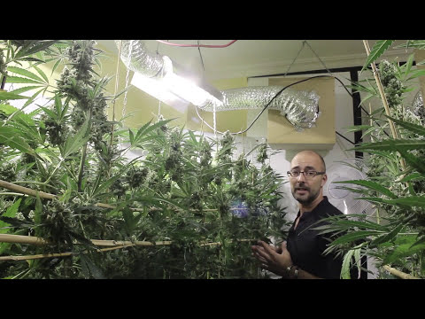 Marihuana Television News16 - ExpoGrow Irún y Foro Social 2013