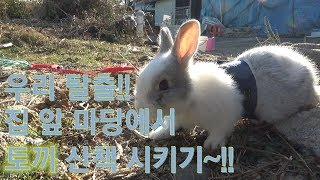 토끼는 케이지 안에서만?? 마당을 나온 토끼!!토끼산책(bear92s)