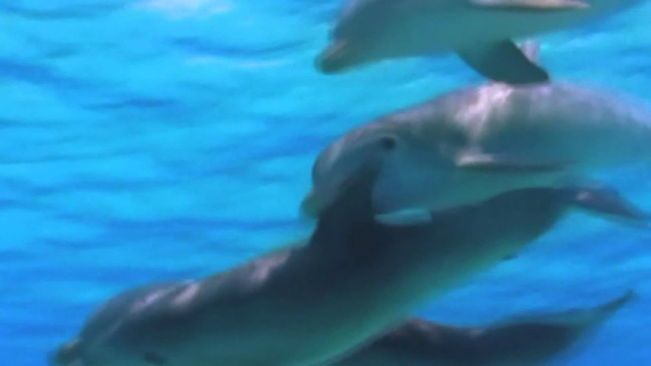 how to make dolphin sounds