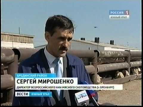 Челябинск Животноводство Уральские герефорды Август 2012