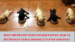 Pet Care | Most Important Food for New Puppies. How to Better way Care & Feeding Little Pup and Dogs