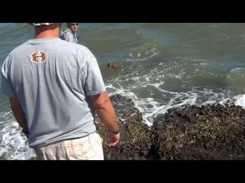 Salt Water Fishing, 6' Bull Shark On The Jetties 6/6