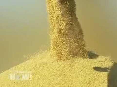 DN! Supreme Court Ruling on Monsanto Crop