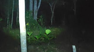 🔴 pocong ngumpet di balik pohon