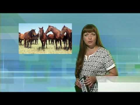 Десна-ТВ: День за Днём от 14.07.2016