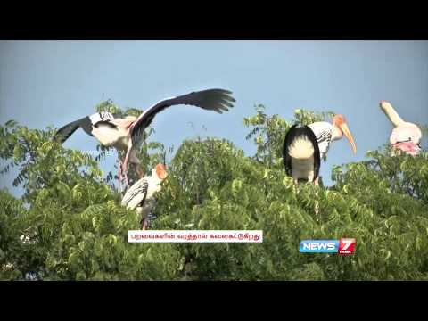 Winged visitors flock Koonthankulam Birds Sanctuary