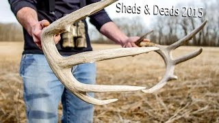 Whitetail Sheds & Deads 2015 (Part 1 of 2)