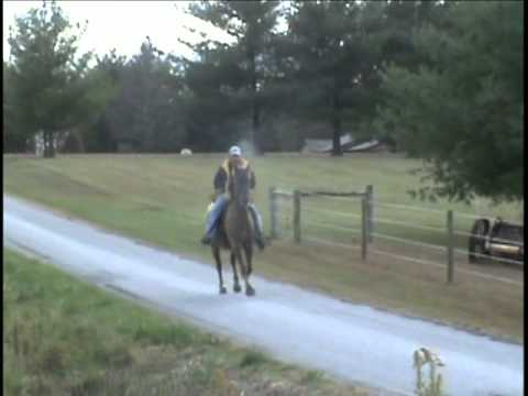 Fast Rocky Mountain Speed Racking Horse owned by Winding Brook Stables