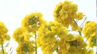 愛知県田原市 市制施行10周年記念映像