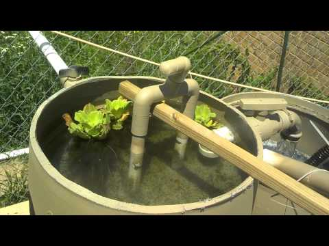 Diy pond how to save money and do it yourself for Pond gravel filter design