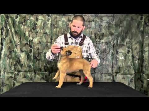 Malinois Puppy Training Lesson One