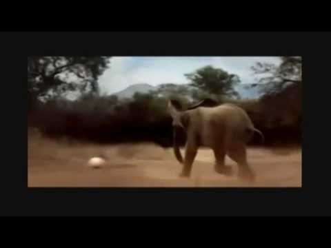 Cute Animal World Cup - Song Waka Waka (This Time for Africa) by Shakira