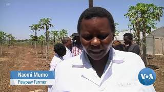 Mobile DNA Analysis Device Helps Farmers Fight Crop Diseases