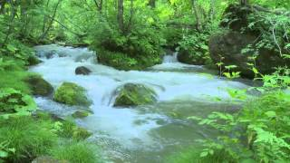 Nhạc thư giãn cùng tiếng suối chảy và tiếng chim hót cực hay ★2