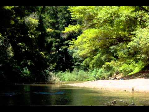Ultimate Virtual Tour of Henry Cowell Redwoods State Park.wmv