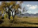 view Cottonwood Tree