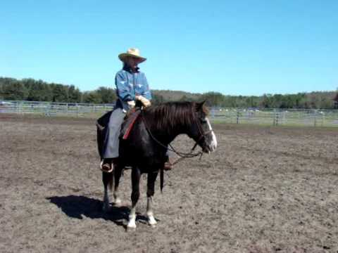 laylon florida cracker horse 08 Video