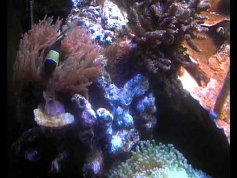 my reef tank august 09