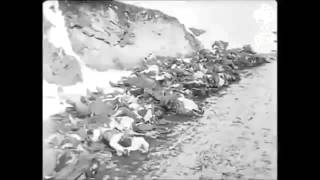 Turkish soldiers carcasses of