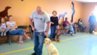 HOW TO STOP A DOG FROM PULLING IN MINUTES