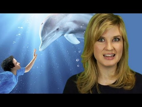 Dolphin Tale 3D Movie Review: Beyond The Trailer