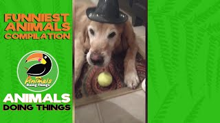 Hotel Dog Bellhop! | CUTE Cat & Dog Videos | Funny Animal Videos | ANIMALS DOING THINGS