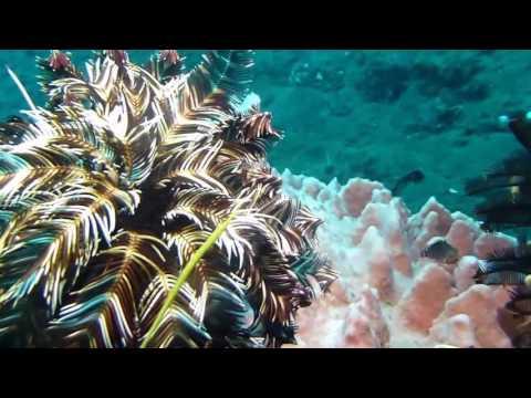 download lagu Bali Island Indonesia Diving gratis