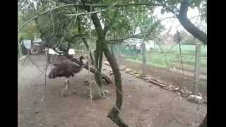 emu playing dog