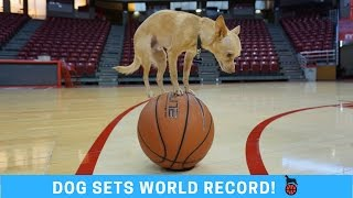 WORLD RECORD: Dog on a Basketball! + Handstand Trick Shots